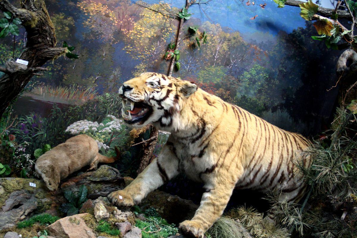 «Растительный и животный мир Уссурийской тайги»<br />